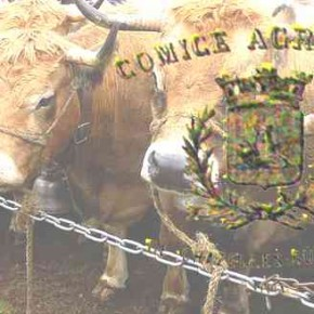 Le (ou les) comice(s) agricole(s) à Chazelles