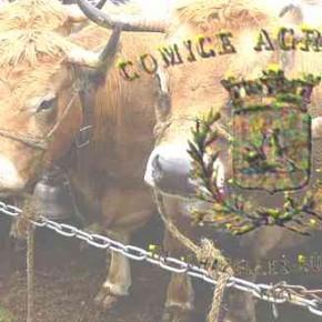 Les comices agricoles à Chazelles