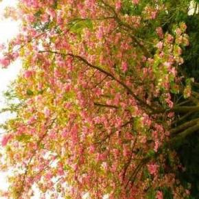 Coutumes et traditions de ce joli mois de Mai